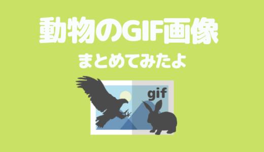 【動物画像①】可愛い「犬猫以外のGIF画像」を厳選してまとめてみたよ