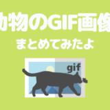 【猫画像⑤】可愛い「猫のGIF画像」を厳選してまとめてみたよ