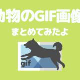 【犬画像①】可愛い「犬のGIF画像」を厳選してまとめてみたよ